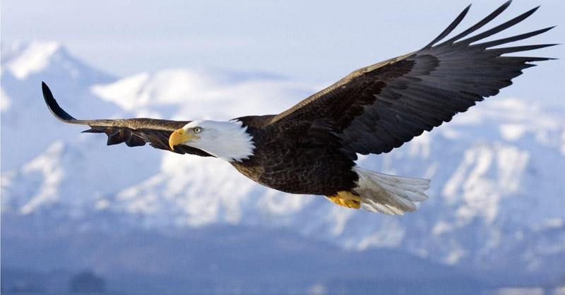 Águia: características e curiosidades