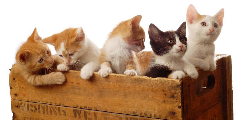 Ciclo de vida dos gatos