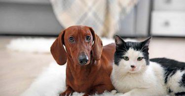 Comprar Cachorro ou Gato é errado? É crime?