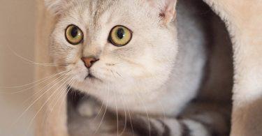 Diarreia em gatos