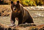 Espécies de ursos