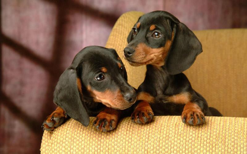 Eutanásia em cães