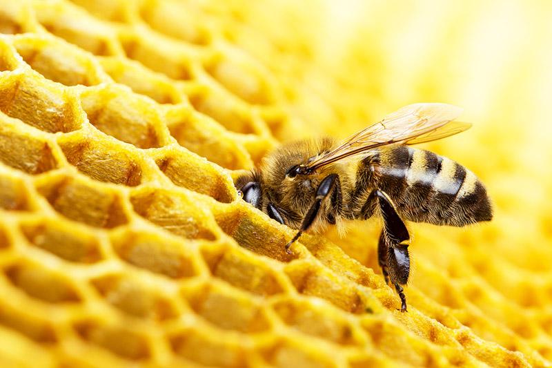 Importância das abelhas