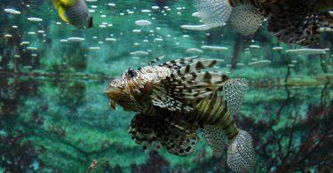 O que peixe come?