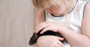 Ratos como animais de estimação